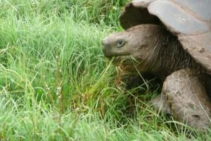 Wildlife on Galapagos