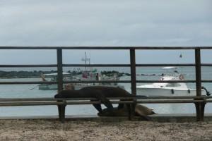 Day 3 Galapagos