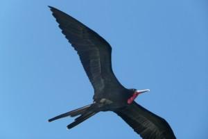 Day 4 Galapagos