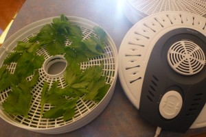 Drying Herbs using a Dehydrator
