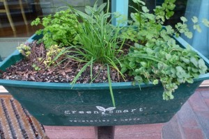 Self-Watering Pots for Herbs