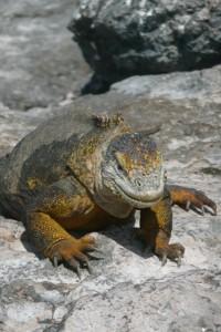 Day 7 Galapagos
