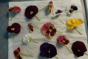 Preserving Edible Flowers