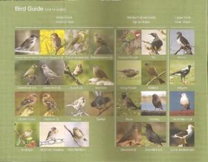 Take part in the Garden Bird Survey