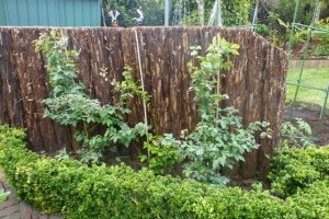 Year 2 Thriving after upheaval for new fence