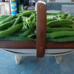#2 trug is perfect for collecting all sorts of things from the garden