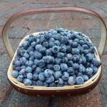 The Berry Trug