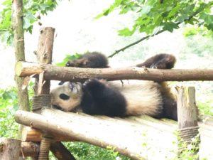 Yangzi & Beyond: Day 5 Chengdu