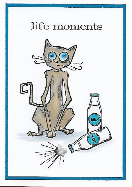 Crazy Cat: Life Moments