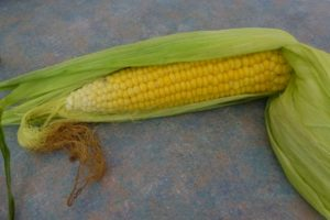 Growing Sweetcorn
