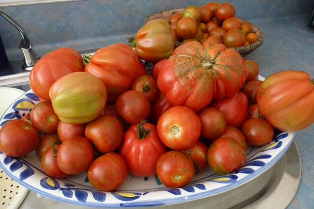 Help, I've got too many tomatoes!!