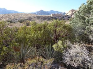 Diverse plants and scenery