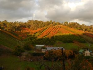 Autumn in the Orchard, Adelaide Hills