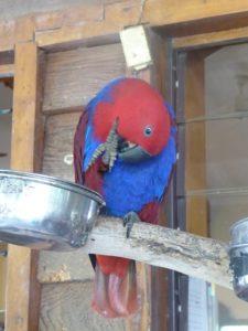 Noisy parrots