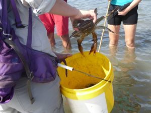 Crab doesn't want to go in the bucket