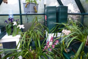 Spring orchid display