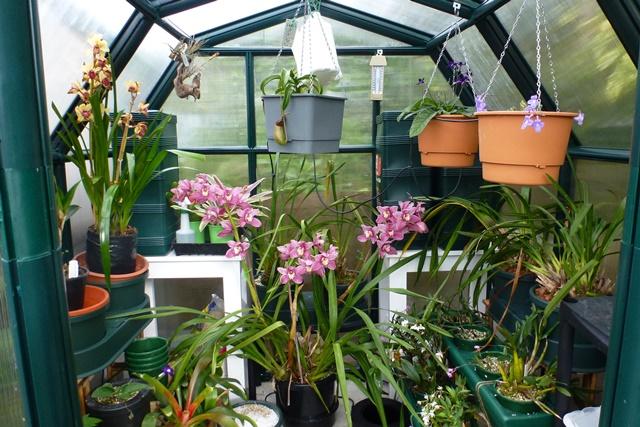 Loving my greenhouse