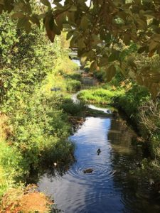 Oakley Creek Walkway (4): Origin