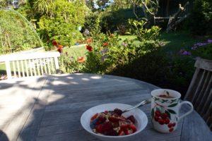 Berry breakfast in the garden