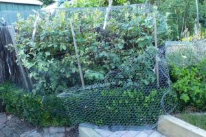 Wire netting, bird scaring tape, more wire netting, and barricades