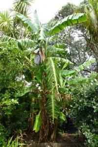 Bananas year 4 - flower