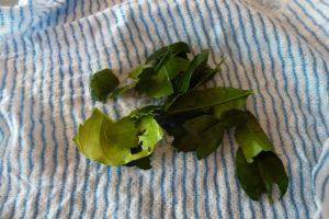 Torn kaffir lime leaves in muslin bag