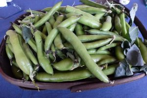 Young broad beans