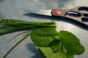 Mint & chives