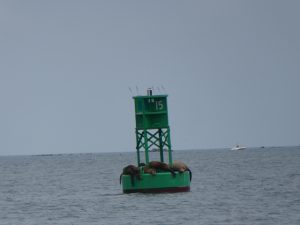 Seals on the harbour marker