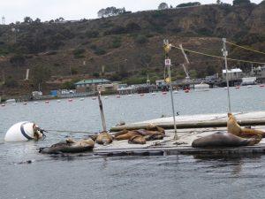 Seals on the pontoon