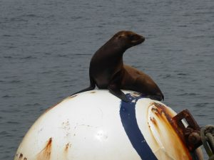 Seals on the buoy