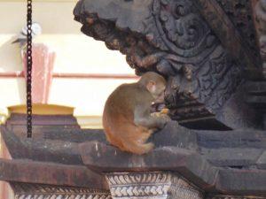 Monkey detail