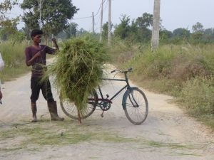 Collecting grass on your bike