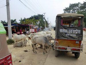 Natural road hazards