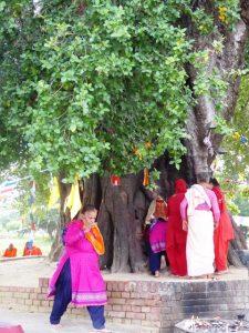 Worshippers at the Bodhi Tree, Lumbini