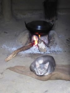 Cats always have the place by the fire