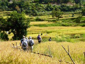 Through the fertile valley