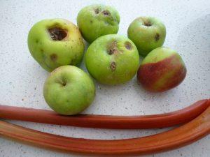 Rhubarb & Apple