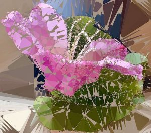 Bauhinia flower photo art