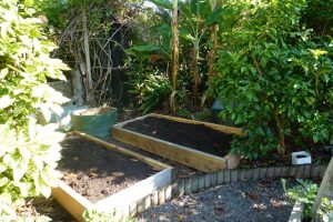 My new asparagus bed (on left)