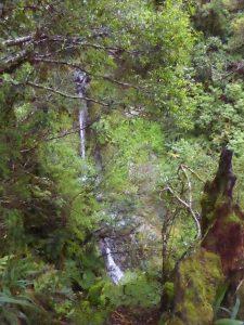 Glimpsing waterfalls through the trees
