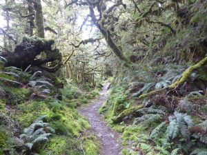 Through the beech forest