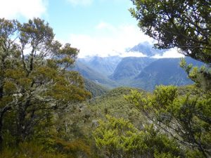 Glimpses of Hollyford Valley & Darren Mountains