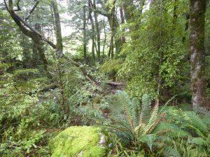Lush undergrowth