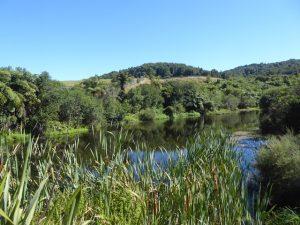 The Wetland Enclosure