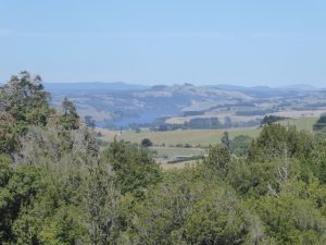 In the Waikato area