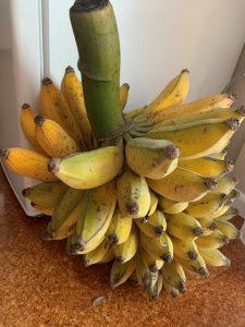 100 bananas ripening at once